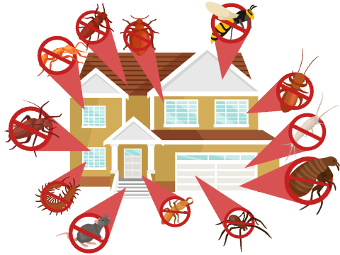 Illustration of a house with exploded view of household pests, ant, cockroach, wasp, white ant, spider, silverfish, flea, rat or mouse, centipede, tick